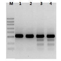 Hot Start Taq DNA Polymerase