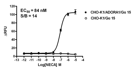 CHO-K1/ADORA1/Gα15 Stable Cell Line
