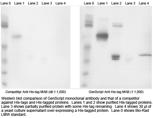 Mouse Anti His-tag Western Blot Comparison